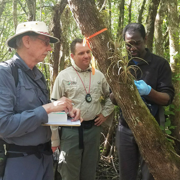 research on orchids in the field