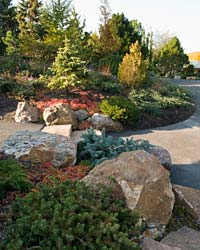 Dwarf Conifer Garden