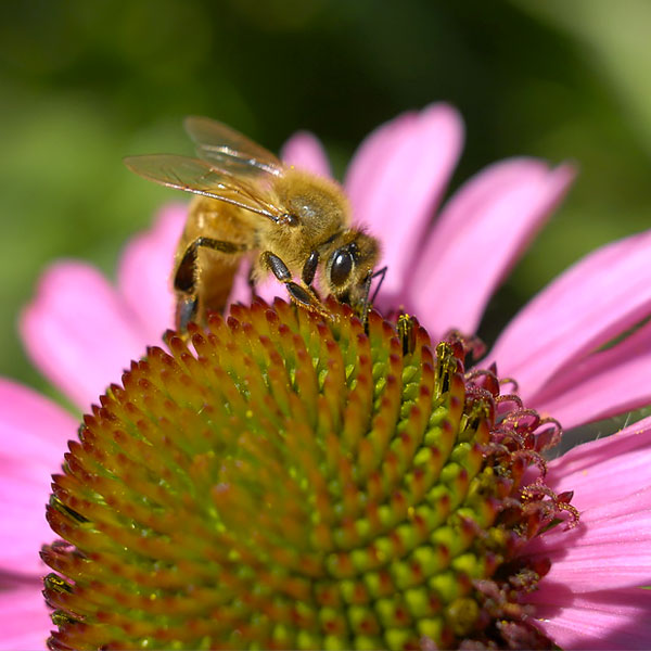 Earth Day - Pollinators