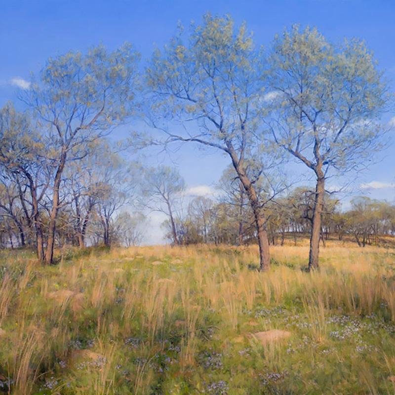 Paintings of Prairie Environments By Philip Juras - Pembroke Savanna