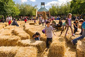 PHOTO: Hay maze