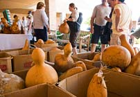PHOTO: Gourd Show and Sale