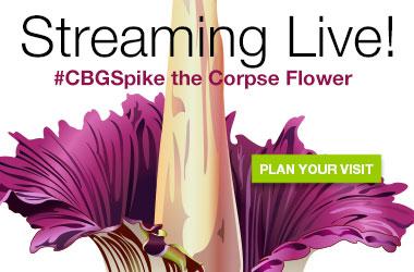 Blooming soon! Plan your visit!