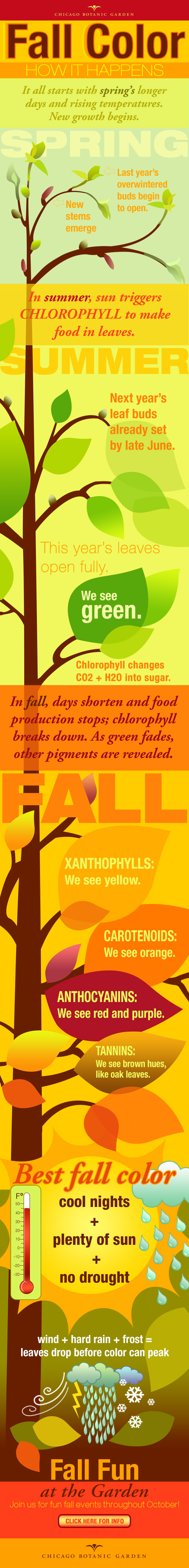 Infographic about Fall Color
