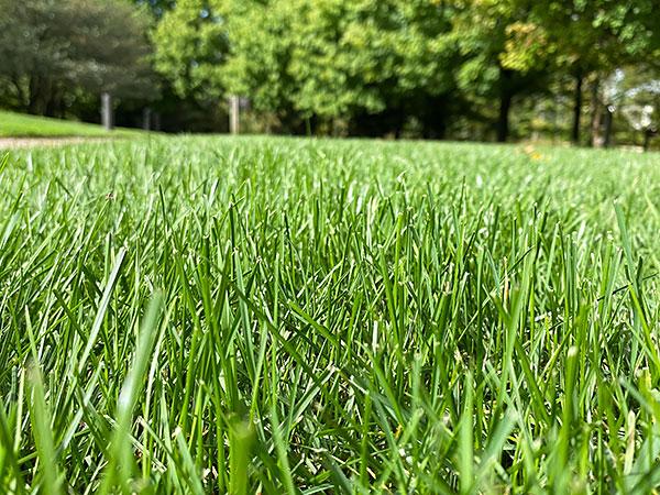 Lawn Care Checklist Chicago Botanic Garden