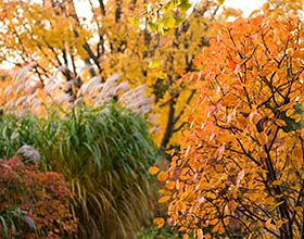 Your Membership Supports Our Mission. Take Advantage Of All That A Chicago  Botanic Garden ...