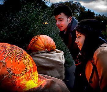 Young couple looking at pumpkins