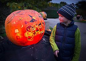 Night of 1 000 jack o 39 lanterns chicago botanic garden - Botanic gardens pumpkin festival ...