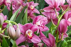 Orchid Show Preview Evening