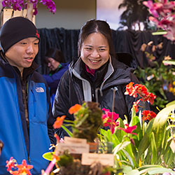 Illinois Orchid Society Spring Show & Sale