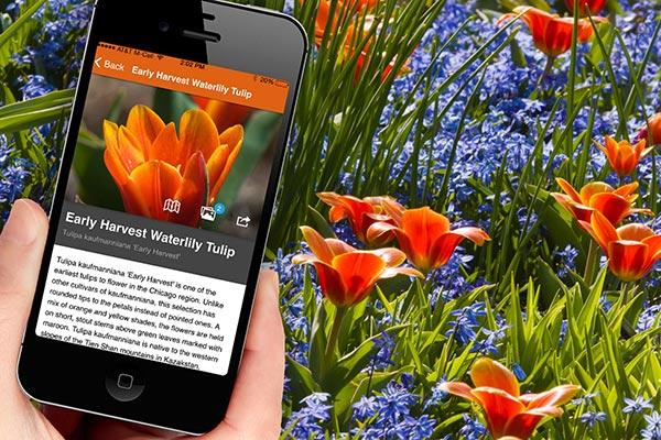 Plant Information Chicago Botanic Garden
