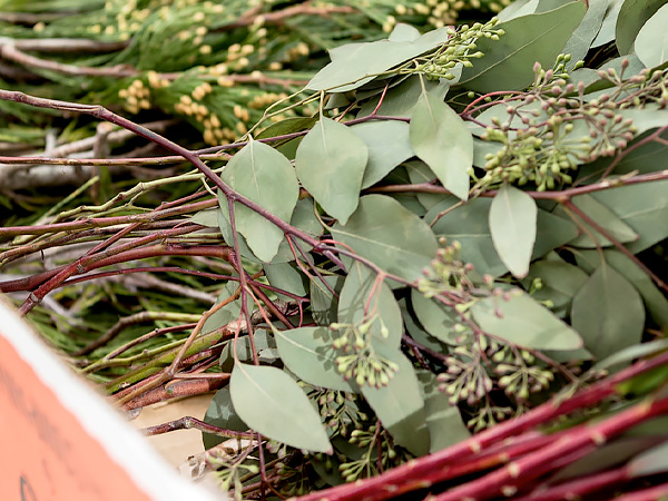 Plant Materials for Holiday Decor