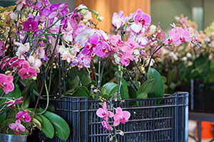 Post-Orchid Show Plant Sale