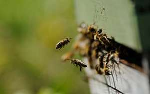 Intro to Beekeeping