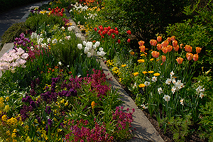 Paint Your Garden with Color
