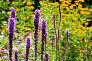 Fantastic Perennials for Fall