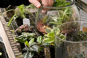 Glass Jar Terrarium Workshop