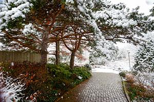 Winter Meditation Walk