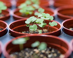 PHOTO: Seedlings