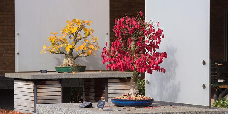Bonsai Collection Fall