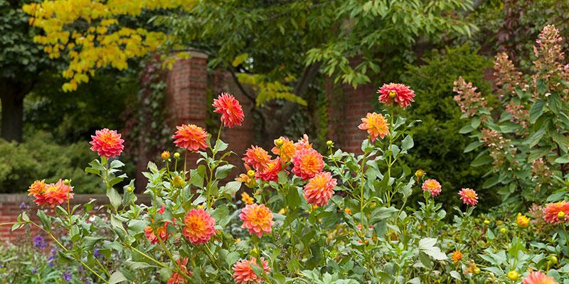 English Walled Garden in fall