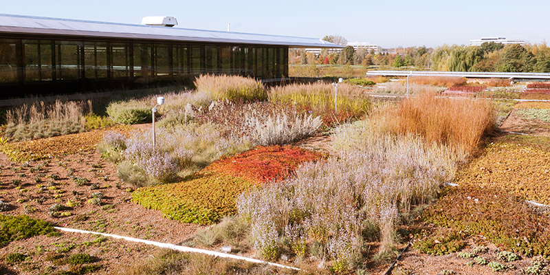 Green Roof Fall