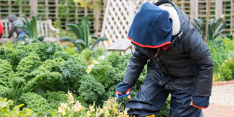 Children's Growing Garden in fall
