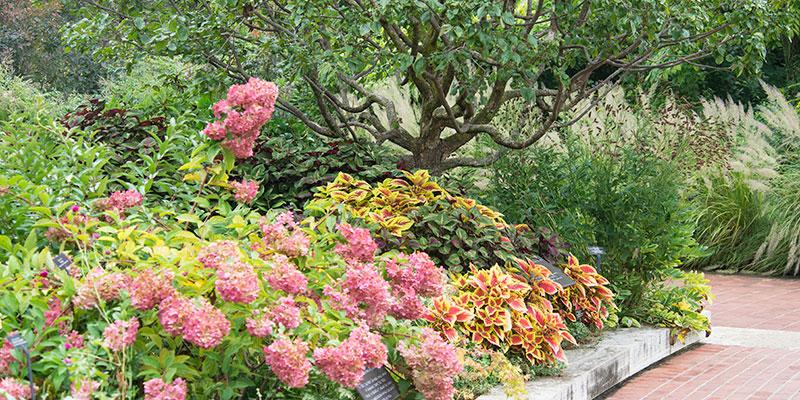 Heritage Garden in fall