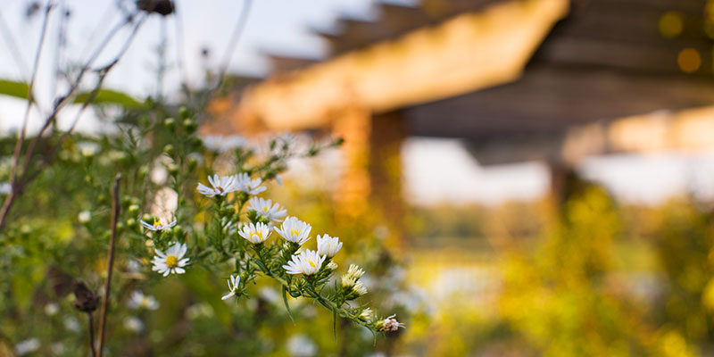 Native Plant Garden in fall