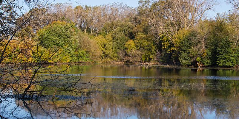 Barbara Brown Nature Reserve Fall