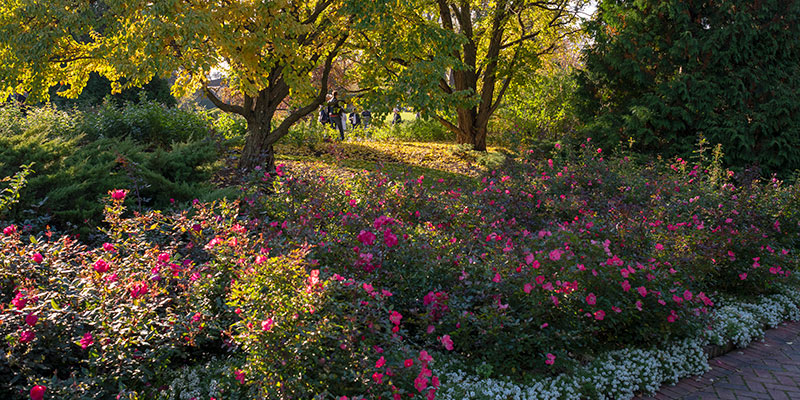Rose Garden in fall