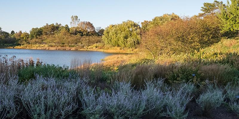 Lake Shorelines Fall