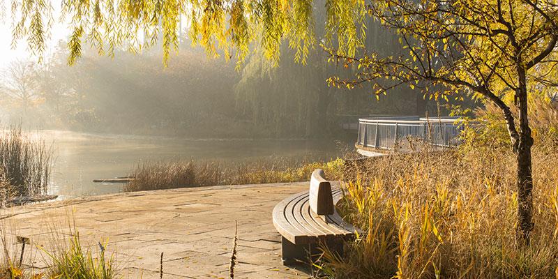 Water Gardens in fall