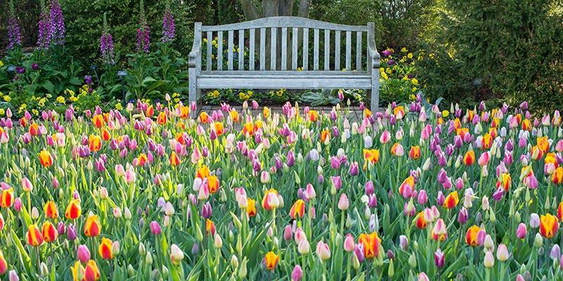Circle Garden in spring