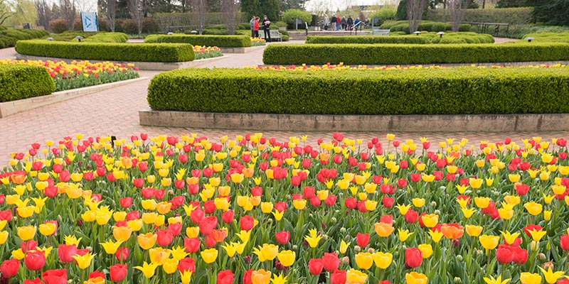 Crescent garden in spring