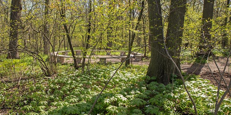 McDonald Woods in spring