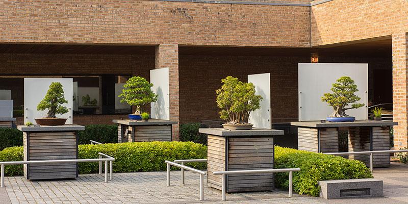 Bonsai Collection Summer