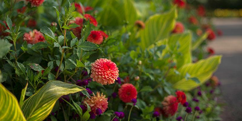 Bulb Garden in summer
