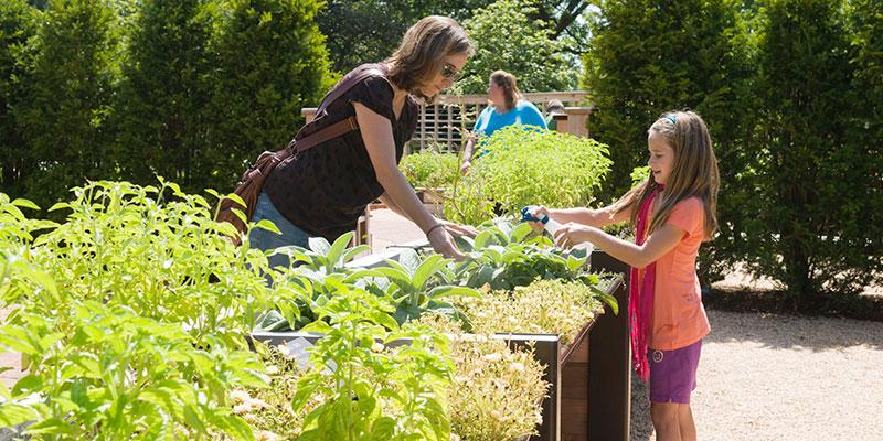 Children's Growing Garden in summer