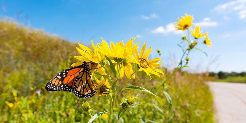 Prairie in summer