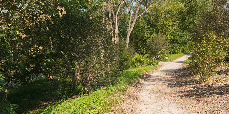 Barbara Brown Nature Reserve Summer