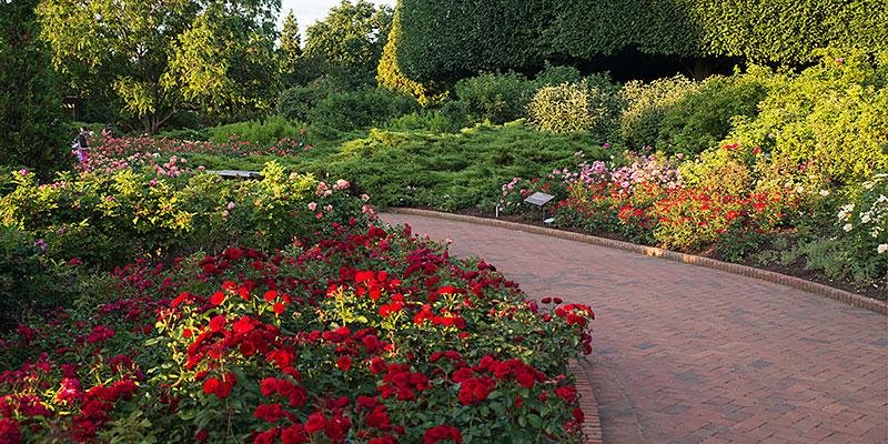 Rose Garden in summer