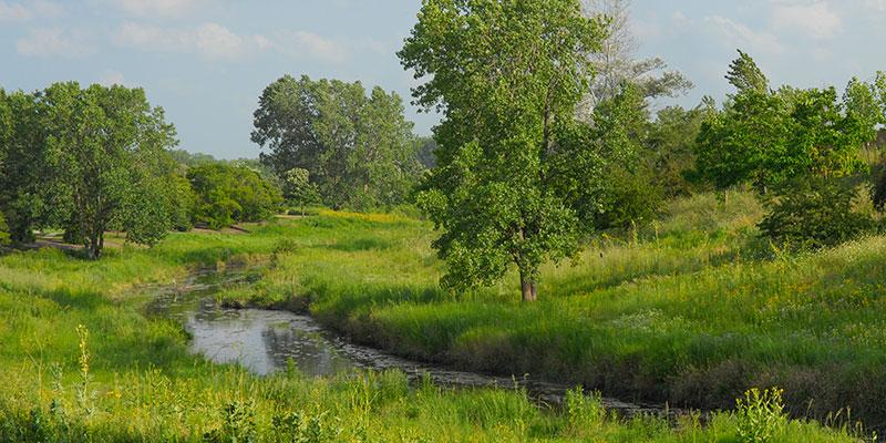 Skokie River in summer