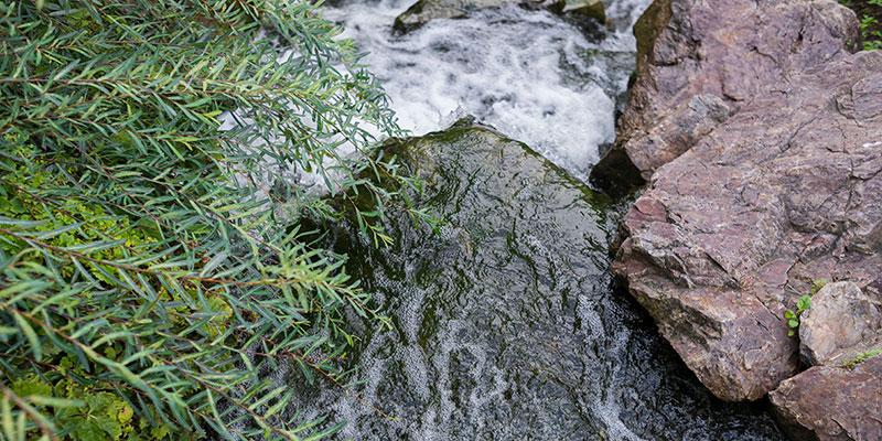 Waterfall Garden in summer