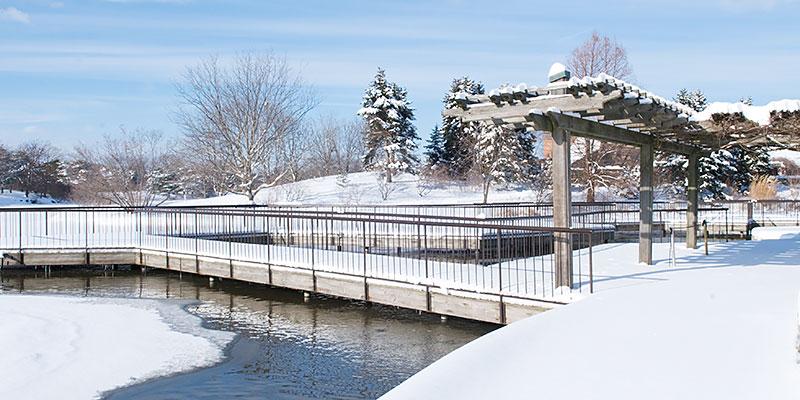 Aquatic Garden Winter