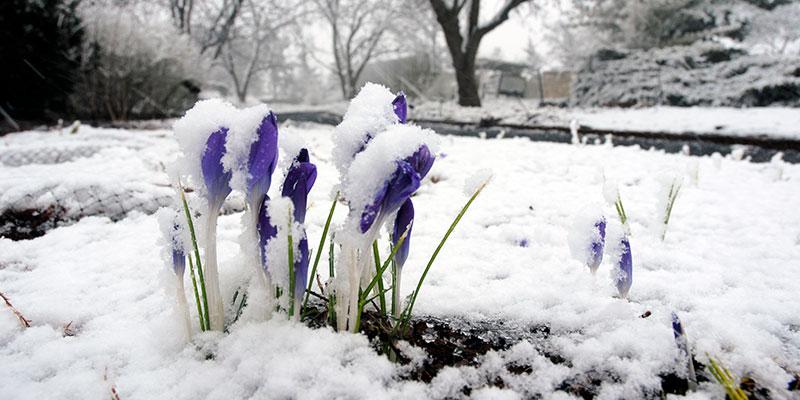 Bulb Garden Winter