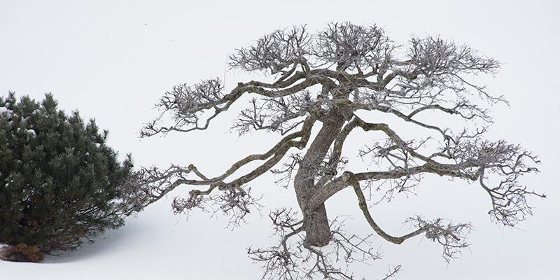 Japanese Garden Winter