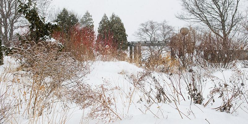 Native Plant Winter