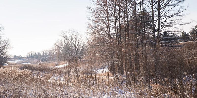 Skokie River Winter
