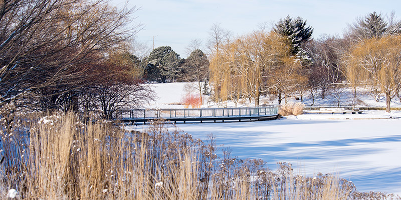 Water Gardens Winter